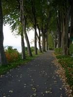 Sentier_dans_le_bois